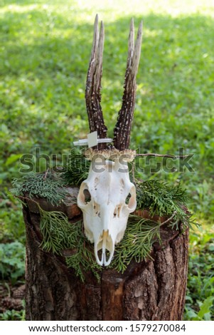 Dry deer antlers attached to the skull on a tree trunk #1579270084