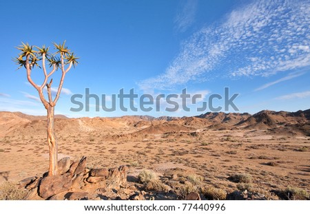 dry desert landscape with quiver tree in Ai-Ais Richtersveld Transfrontier Park in South Africa