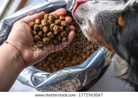 dry dog food in plastic bag and dog head, pet feed for medium dogs. Dog eat from the hand