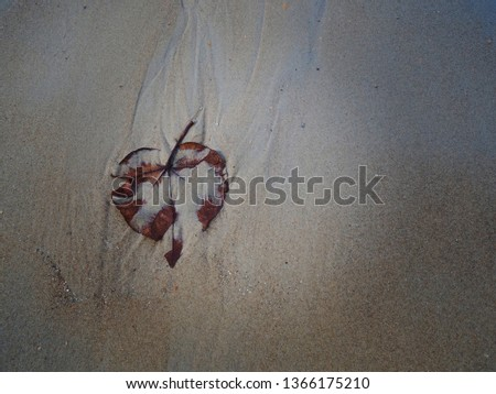 Dry Dry leaves on the sand by the sea, beautiful but lonely, lonely, lonely Soft focus and blurred background And vintage style