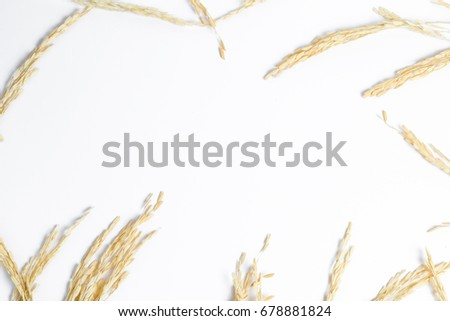 Dry ear of rice isolated on white bacground. #678881824