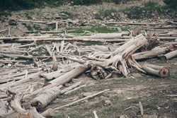 dry fallen trees on the ground. Sawmill, wood industry, construction, firewood, deforestation, environmental disaster