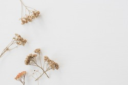 Dry floral branch on white background. Flat lay, top view minimal neutral flower background.
