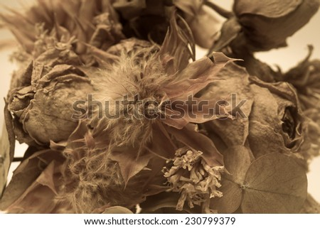 dry flower concept