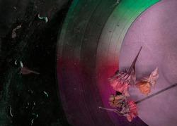 Dry flower on vinyl record music closeup background. Romantic melody. Rainy mood old music image. Nostalgia music pattern. Vinyl plate. Vintage stylized photo.