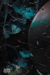 Dry flower on vinyl record music closeup background. Sad melody for the night. Rainy mood old music image. Nostalgia music pattern. Vinyl plate. Vintage stylized photo.