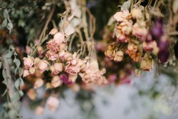 Dry flowers.Dried rose flowers