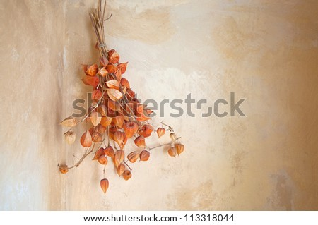 Dry flowers hanging on the wall, autumn background decoration