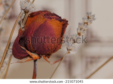 dry flowers in a kitchen