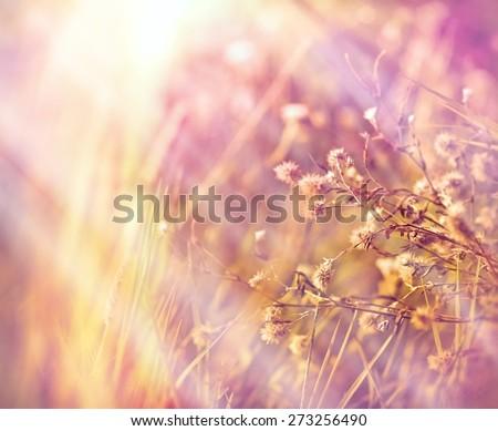 Dry flowers in meadow (dry plants)