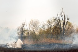 Dry grass burns in a forest fire with bright and large tongues of fire. The problem of environmental pollution.