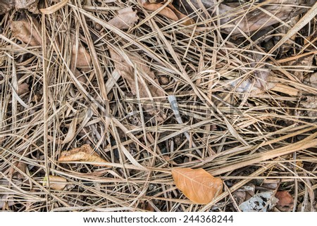 Dry grass, dry leaves texture background.