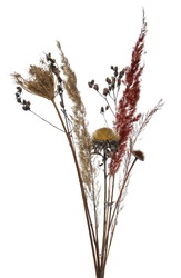 Dry grass, field plants isolated on white background with clipping path