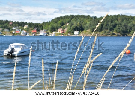 Dry grass flowers With the blur sea background. Dry blur yellow dry plants grass and blue sea background, greek motive. field, sunset, reed, cane, bulrush. Reeds on the riverside. Reeds on the seaside #694392418