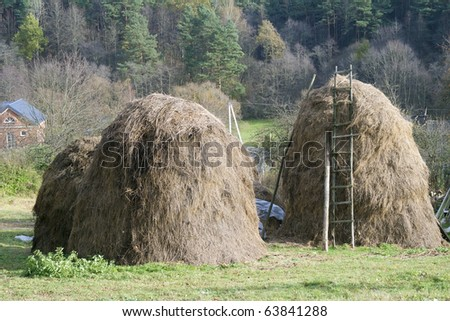 Dry grass, fodder haystacks for a food of a cows in the winter.