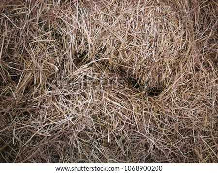 Dry grass in the store room