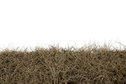 Dry grass isolated on white background.dry grass field with clipping path.