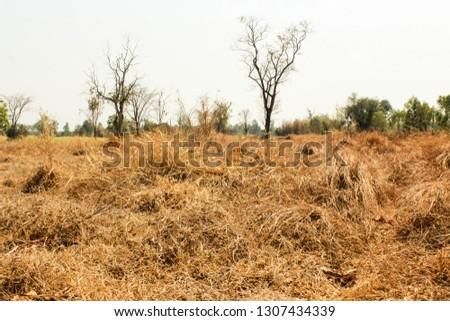 dry grassland are summer #1307434339