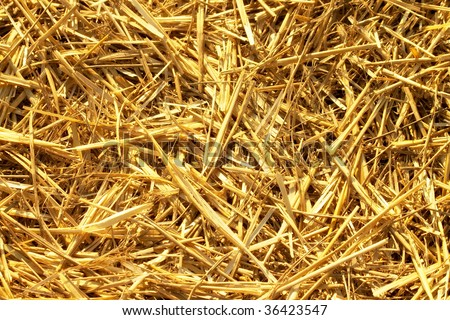 Dry hay straws background