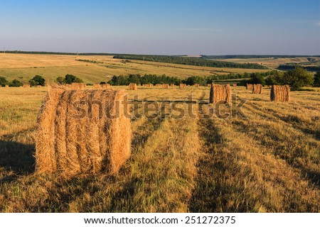 Dry haystacks after grass harvesting in Yamskaya Steppe protected area, Belgorod region in southern Russia