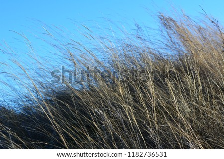 Dry herbs on the background of blue sky. Windy day.