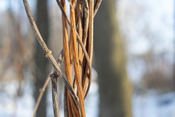 Dry, intertwined bush in the forest