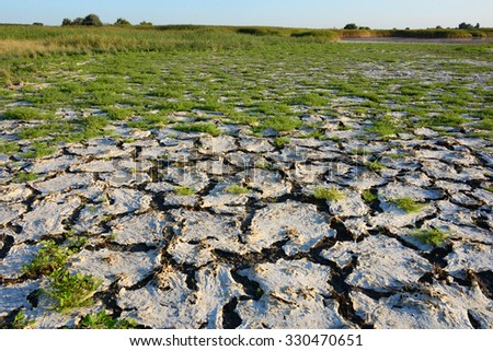 Dry lakeshore in the end of summer at Neusiedler See, Austria.  #330470651