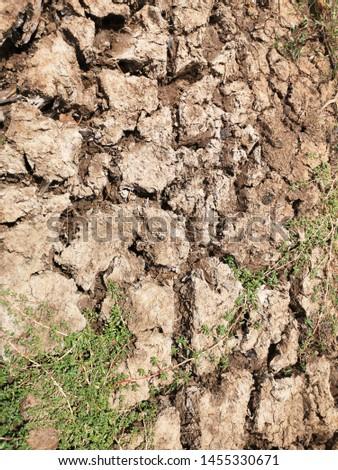 Dry land in the dry season at Phusing Sisaket Thailand.
