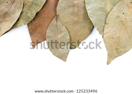 Dry laurel leaf isolated on white background