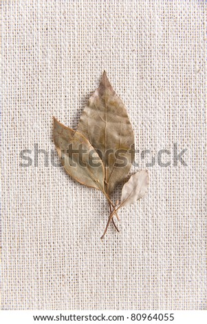 dry laurel leaves spices for addition in food