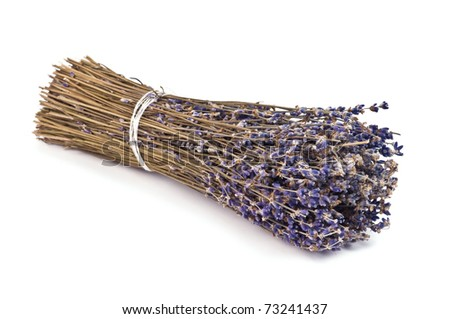 dry lavender bunch isolated on white