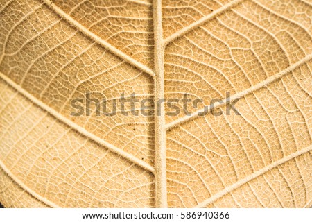 Dry leaf background. Yellow leaves pattern. #586940366