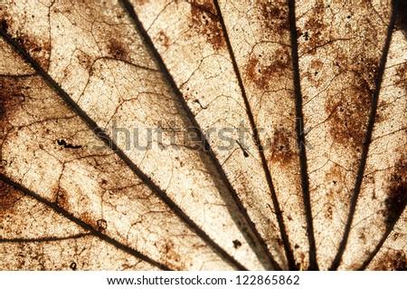 Dry leaf close up.