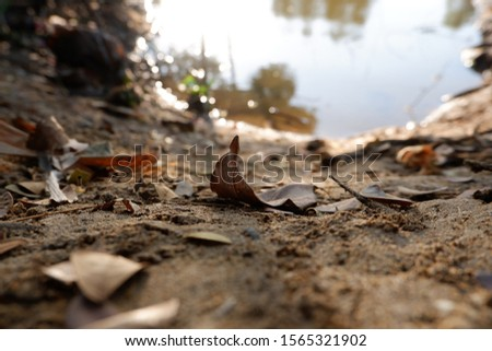 Dry leaf fall down on the ground.close up shot phptography,take nealy the carnal.Ayutthaya,Thailand Сток-фото ©