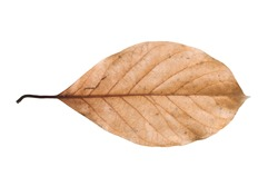 Dry leaf isolated on white background