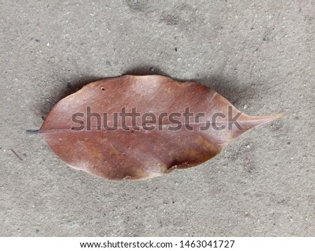 Dry leaf, macro Dry leaf, Dry leaf naturai, Dry leaf isolated #1463041727