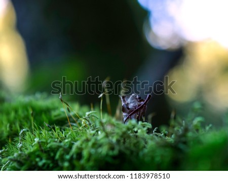 Dry leaf on a moss, close up with blurred dark and lights background, moody magic forest. #1183978510