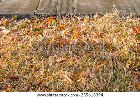 Dry leaf on dry grass with cement floor