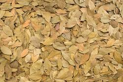 dry leaf on ground
