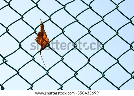 dry leaf on steel wire mesh - closeup #550435699