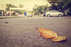 dry leaf on the road ; selective focus (vintage style)