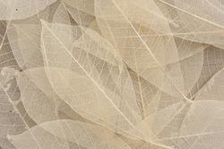 Dry leaf pattern on wood background