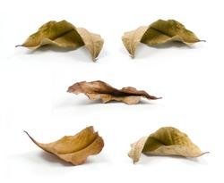 dry leaf set isolated on white background.