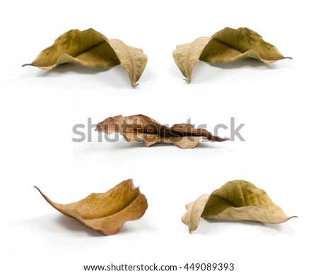Dry leaves flying Images and Stock Photos - Avopix com