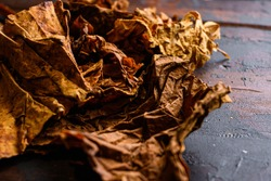 dry leafs tobacco close up Nicotiana tabacum and tobacco leaves on old wood planks table dark side view space for text