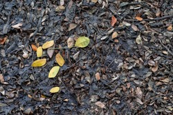Dry leaves and some green and yellow leave on the wet floor