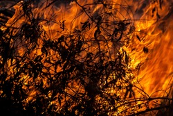 Dry leaves burning during a grass wild fire