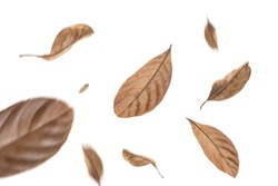 dry leaves flying on white background,motion blur