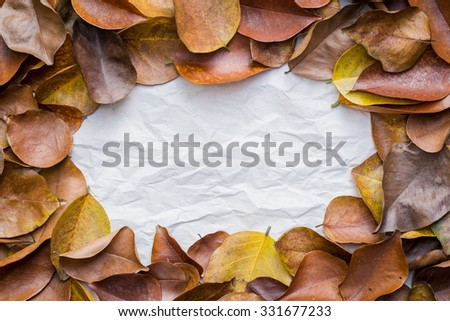 dry leaves in autumn. dry leafs background. for add text message.