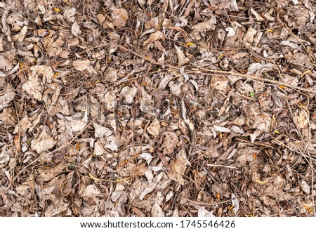 Dry leaves in forest. Top view. Natural background. Zdjęcia stock ©